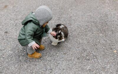 Denk goed na voordat je een huisdier in huis haalt